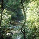 Cummings Otter River
