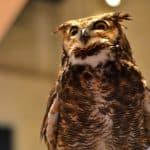 Owl Presentation