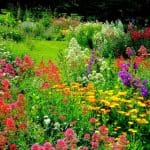 Image of a Flower Garden