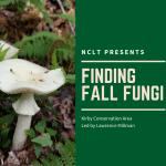 Finding Fall Fungi