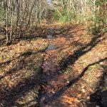 Kirby Trail Work Day