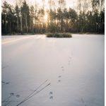 Winter Animal Tracking