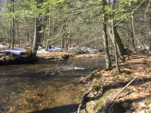 The Wekepeke Brook as it flows through the Gaw property.