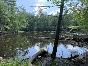 Features of the property include a small hidden pond that drains to Otter River